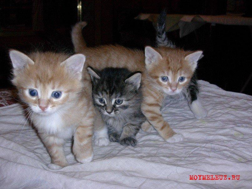 Домашние котята